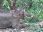 Sunder-in-new-home-500x374
