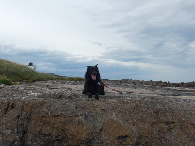 Oby on the beach Northumberland July 2014