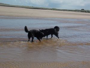 Jazz and Oby paddling in the sea